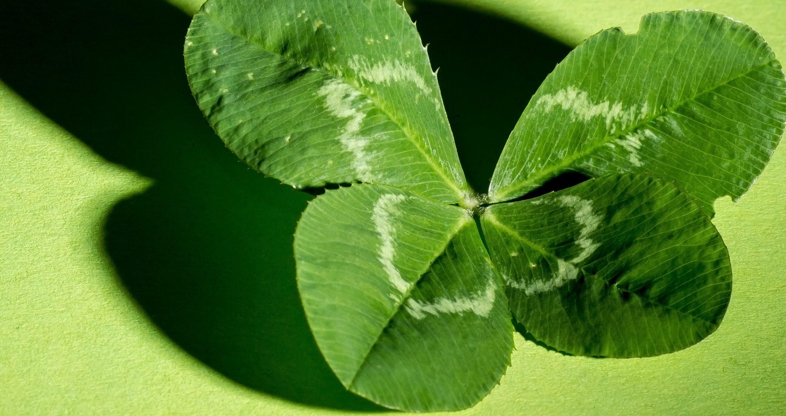 Glücksseminar – Dein Weg zum Glück!